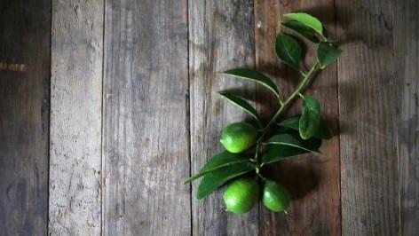 Kharen Hill amazing limes