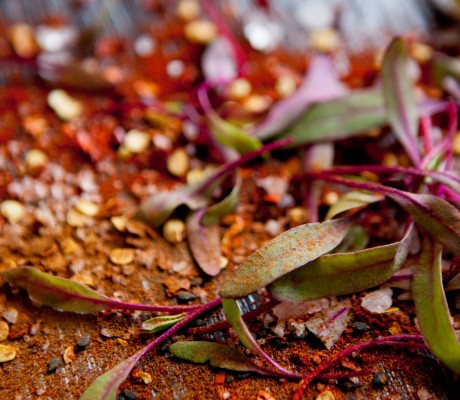 spices and microgreens